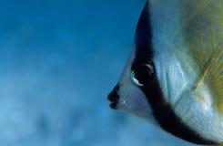 Cara de los pescados Fotos de archivo