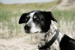 Cara de um cão Fotografia de Stock