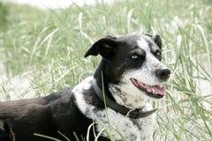 Cara de um cão Fotos de Stock