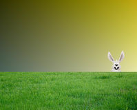 Cara de um coelho imagem de stock