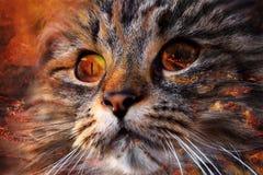A cara de um gato do demônio Foto de Stock Royalty Free