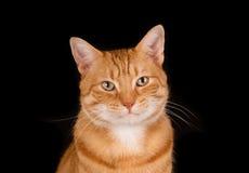 Cara de um gato do gengibre Fotos de Stock Royalty Free