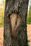 Cara de uma casca de árvore foto de stock royalty free