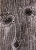 Cara de un árbol Fotos de archivo