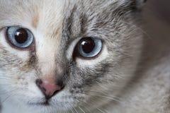Cara de un gato Imagen de archivo libre de regalías