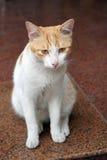Cara de un gato Fotografía de archivo libre de regalías