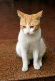 Cara de un gato Imagen de archivo