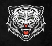 Cara de un tigre blanco En fondo oscuro Imagen de archivo libre de regalías