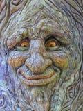 Cara del árbol Fotografía de archivo libre de regalías