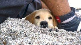 Cara del animal doméstico Foto de archivo libre de regalías