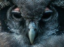 Cara del búho Imagen de archivo libre de regalías