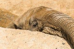 Cara del elefante Fotos de archivo libres de regalías