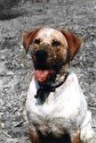 Cara del fango Imagen de archivo
