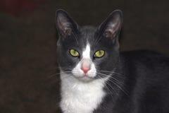 Cara del gato Foto de archivo libre de regalías
