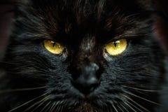 Cara del gato negro con los ojos amarillos imagenes de archivo
