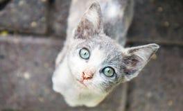 Cara del gato que mira para arriba en Lima Kennedy Park Imágenes de archivo libres de regalías