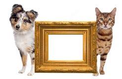Cara del gato y del perro a la cara Imágenes de archivo libres de regalías
