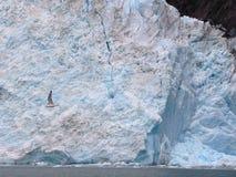 Cara del glaciar Imagen de archivo