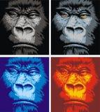 Cara del gorila Imagen de archivo libre de regalías