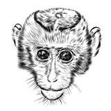 Cara del mono del bosquejo Vector dibujado mano del garabato Fotografía de archivo libre de regalías