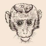 Cara del mono del bosquejo Vector dibujado mano del garabato Fotografía de archivo