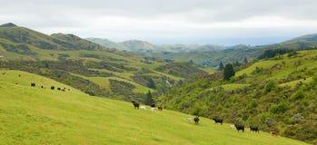 Cara del país de Nueva Zelandia fotos de archivo