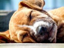 Cara del perrito Fotos de archivo