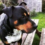 Cara del perro Foto de archivo