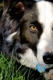 Cara del perro Fotografía de archivo libre de regalías