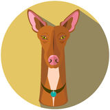 Cara del perro de caza del faraón - ejemplo del vector Foto de archivo