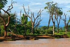 Cara del río Fotografía de archivo