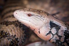 cara del ` s del lagarto Fotografía de archivo libre de regalías