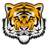 Cara del tigre Foto de archivo libre de regalías