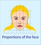 Cara del vector con las líneas que muestran las proporciones faciales para la cosmetología y que dibujan estudio Fotografía de archivo libre de regalías