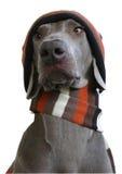 Cara delantera del perro con el sombrero y la bufanda Foto de archivo libre de regalías
