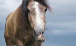 Cara divertida del caballo contra el cielo Imagen de archivo libre de regalías