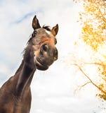 Cara divertida del caballo contra el cielo y el árbol Imagenes de archivo