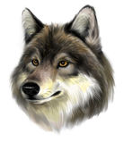 Cara do lobo Fotos de Stock