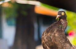 Cara do pássaro no lado direito Imagens de Stock