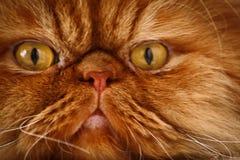 Cara do ` s do gato Imagens de Stock