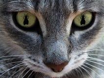 A cara do ` s do gato com olhos como a mosca O conceito da caça para moscas Macro fotografia de stock