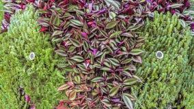 Cara do Topiary Imagens de Stock Royalty Free