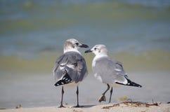 Cara a cara: dos pájaros foto de archivo