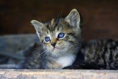 Cara dulce del gatito Foto de archivo libre de regalías