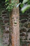 Cara em uma árvore Fotografia de Stock
