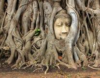 Cara en árbol Foto de archivo libre de regalías