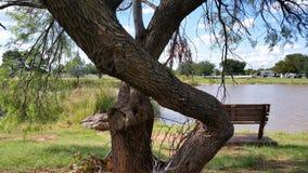 Cara en el árbol fotos de archivo libres de regalías