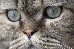 Cara encantadora del gato. Fotografía de archivo