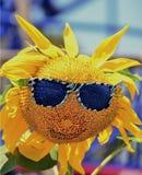 Cara feliz do girassol Fotografia de Stock
