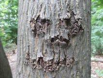 Cara feliz tallada en árbol Imagen de archivo